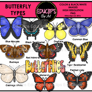 Butterfly Types
