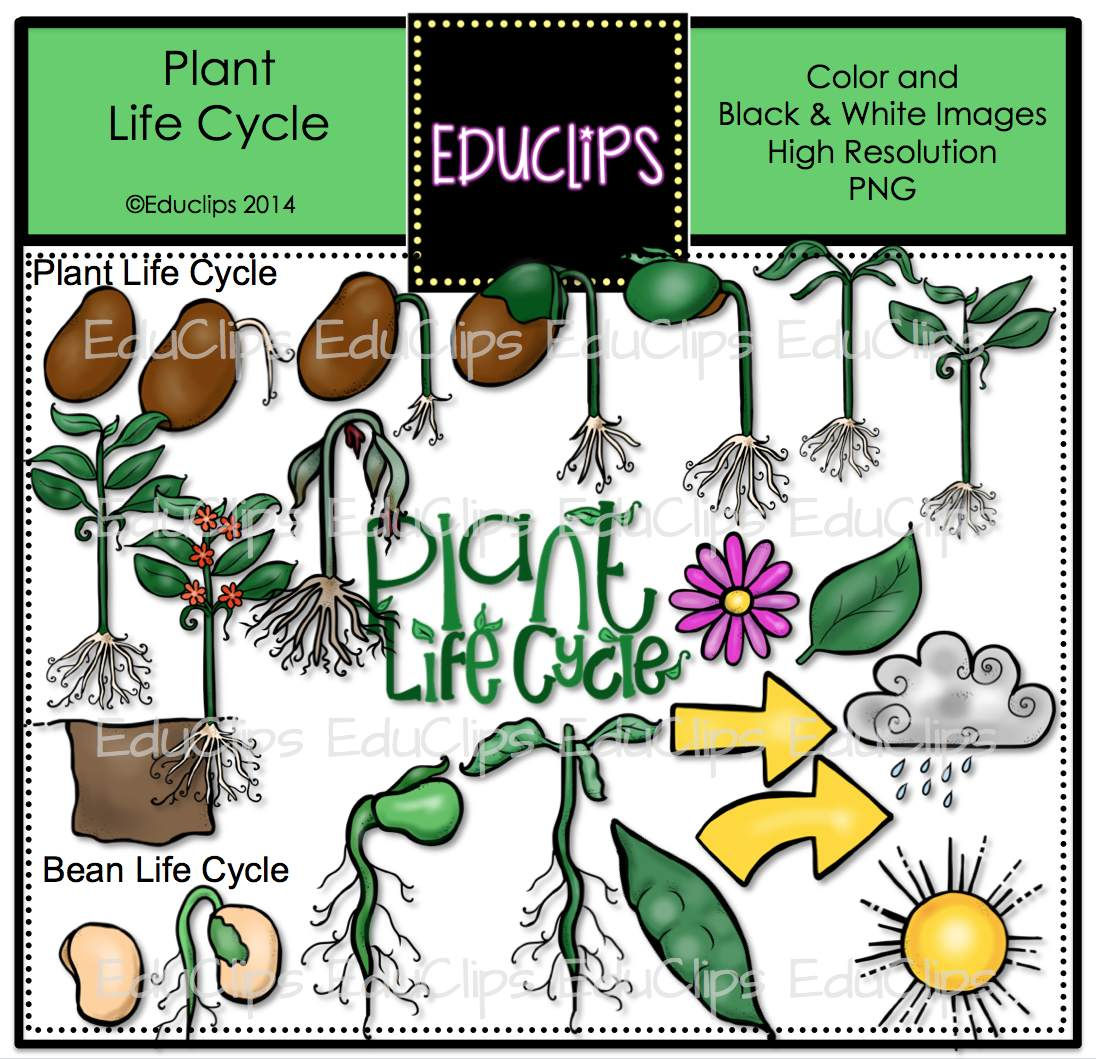 Plant Life Cycle Clip Art Bundle (Color and B&W) | Welcome ... - photo#47