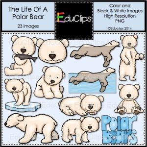The Life Of A Polar bear