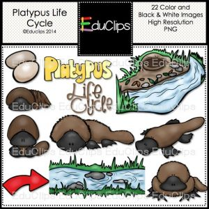 Platypus Life Cycle