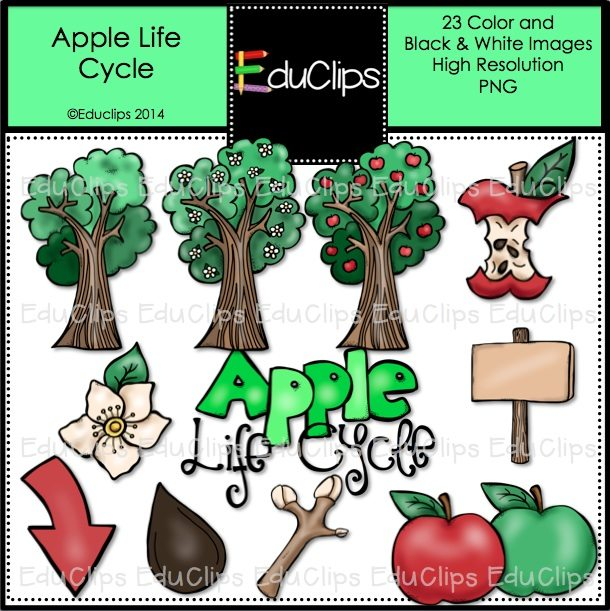 Apple Life Cycle Coloring Page
