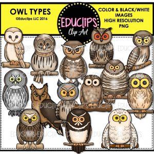 Owl Types