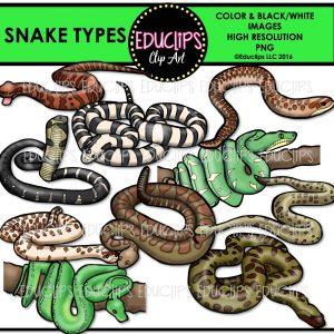 Snake Types