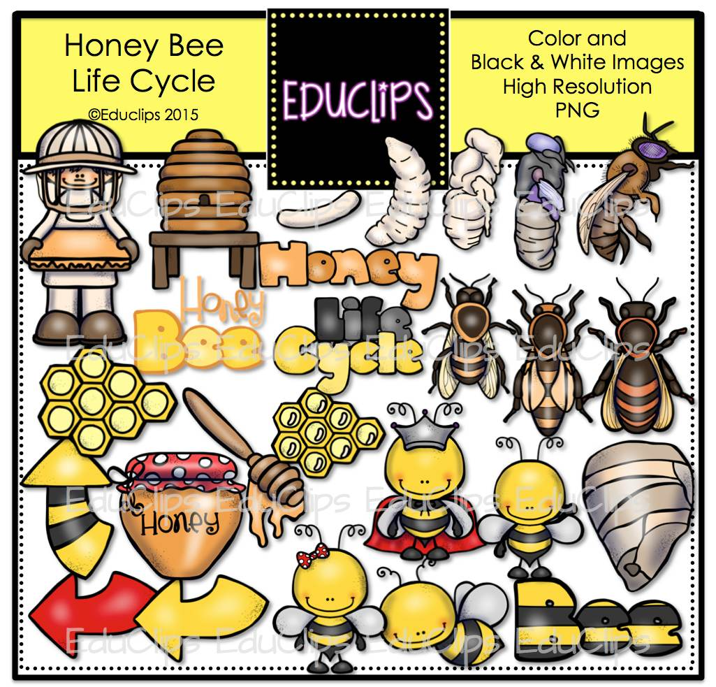 Honey Bee Life Cycle Clip Art Bundle (Color and B&W ...