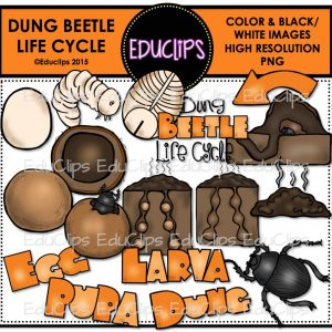 Dung Beetle Life Cycle