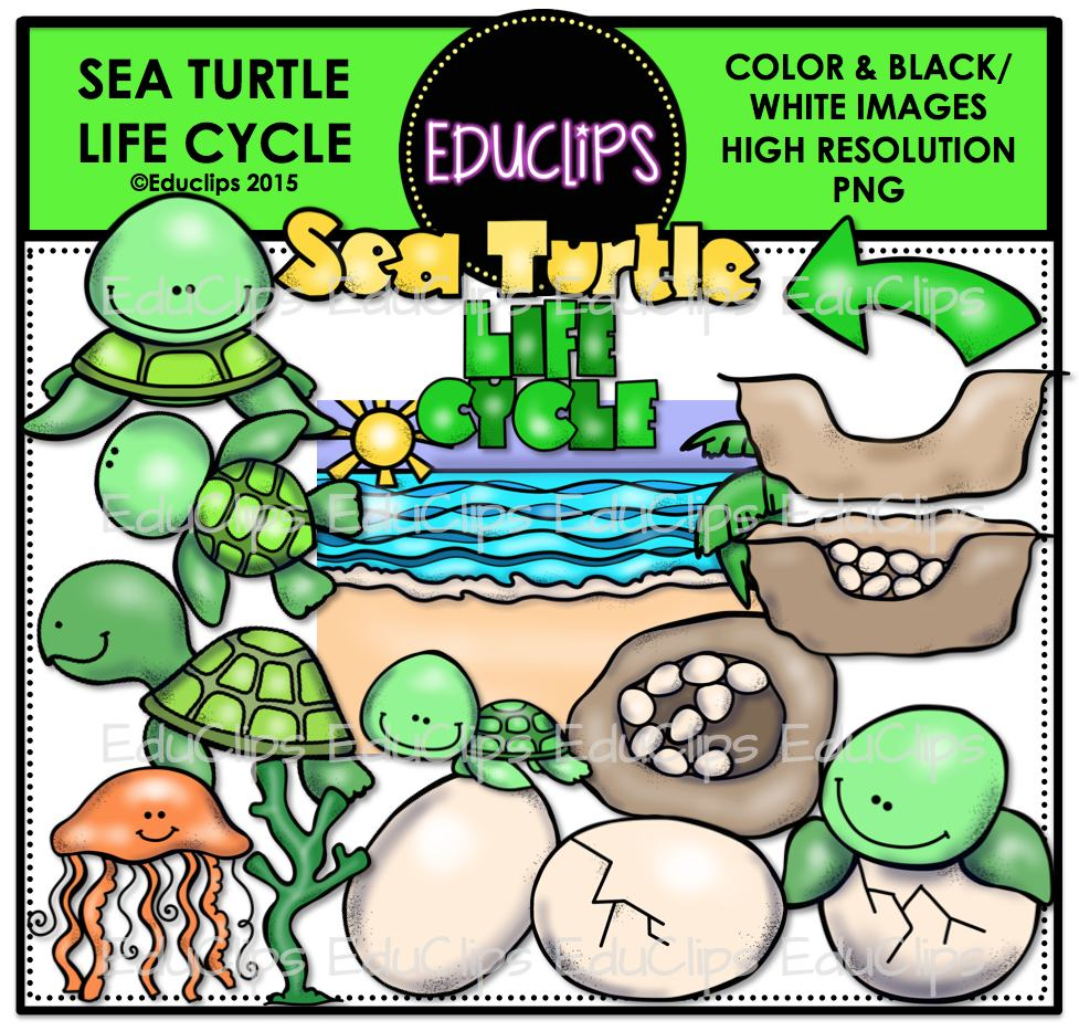 Sea Turtle Life Cycle Clip Art Bundle (Color and B&W) | Welcome to ...