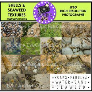 Shells & Seaweed Textures