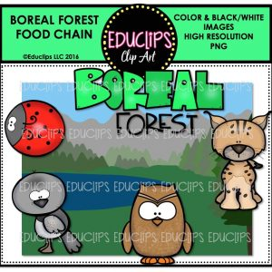 boreal-forest-food-chain