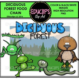 deciduous-forest-food-chain