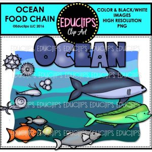 ocean-food-chain