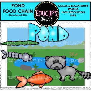 pond-food-chain