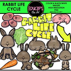 Rabbit Life Cycle