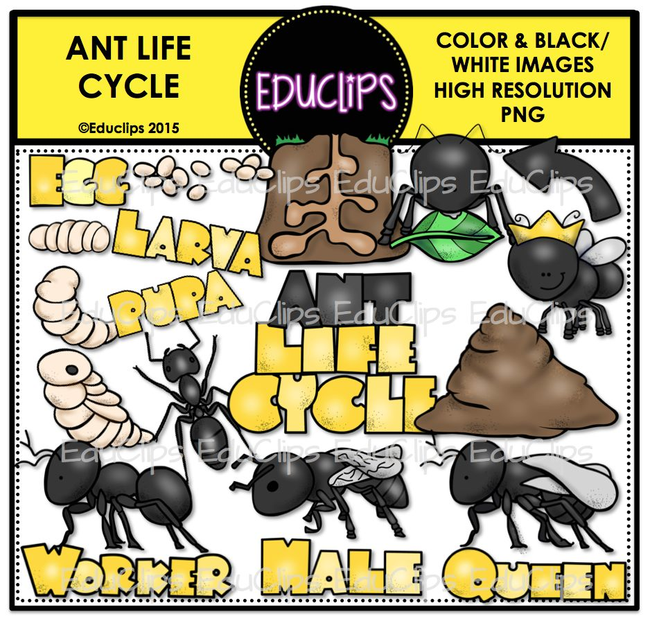 Ant Life Cycle Clip Art Bundle Color And B W Edu Clips