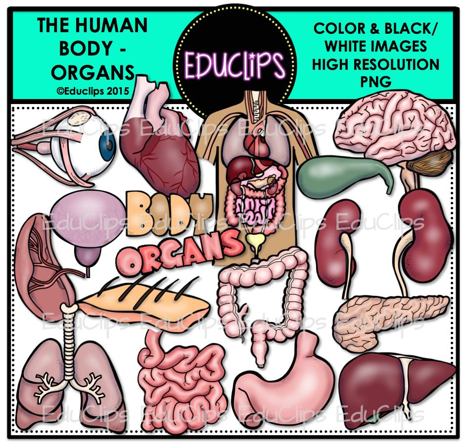 The Human Body - Organs Clip Art Bundle (Color and B&W) - Welcome to ...